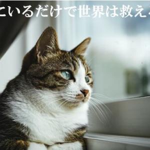 (猫1005)家にいるだけで世界は救えると聞いた飼い主と親子の会話