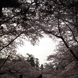 2019年の桜の写真を振り返って弘前公園に行ったつもりにならない会?