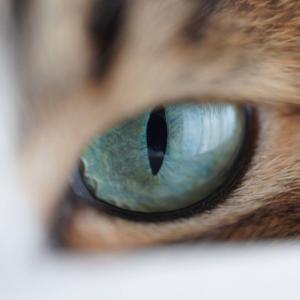 (猫1045)前の会社の人と連絡がつかない飼い主とどあっぷに挑戦の愛猫と