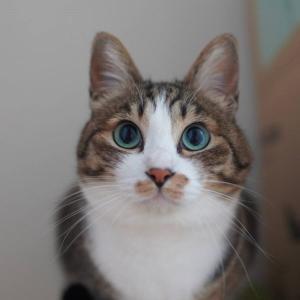 (猫1053)便箋を投函される飼い主と箱の中身が気になる愛猫と