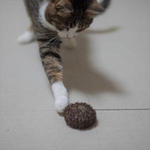 (猫1094)ウニと愛猫 ~海の生き物さんのこんにちは~