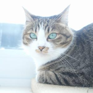 (猫1110)ニンテンドースイッチに思いを馳せる飼い主と窓際の愛猫と