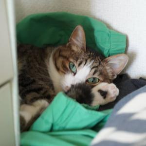 (猫1124)続・シズクフォト挑戦の飼い主とウィンドブレーカーを寝床にする愛猫と