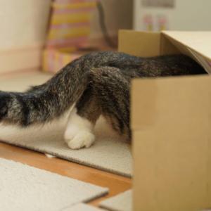 (猫1126)中島みゆき見に行った話と箱に滑り込む愛猫と