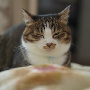 (猫1128)お墓参りする飼い主と蚊に刺されない愛猫と