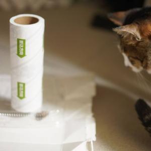 (猫1129)花火大会乗り込めー!!の飼い主と蛾を見つめる愛猫と