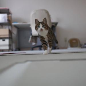 (猫1152)防災グッズの中身確認と久々のとことことらやん