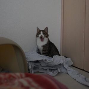 (猫1160)愛猫のお気に入りアイテムを捨てようと暗躍するけどもばれる件について
