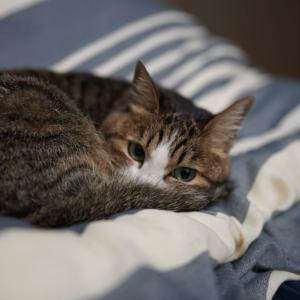(猫1162)原因不明の通信量とお布団に来るようになった愛猫と