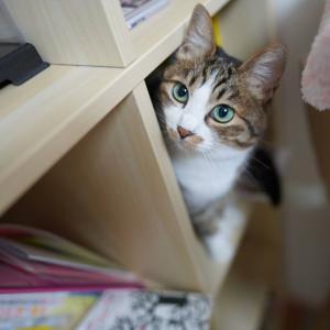(猫1168)寒さに負ける飼い主と毛糸保管箱に突っ込む愛猫と