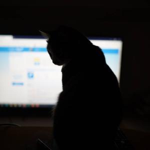 (猫1191)鬼滅の刃見に行った飼い主とシルエットがないすな愛猫と