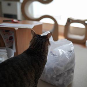 (猫1195)「パワハラ会議」から入った飼い主とお気に入りのごそごそ捨てられる愛猫と