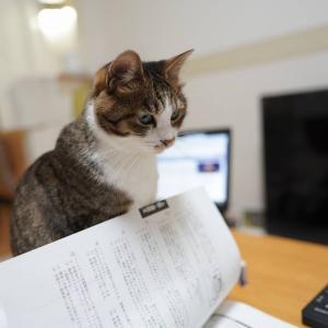 (猫1198)「気になるリンゴ」でテンション上がる飼い主と勉強の邪魔する愛猫と