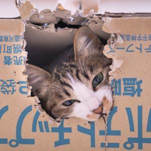 (猫1200)今年があと二か月ということに慄く飼い主と愛猫のあれこれ