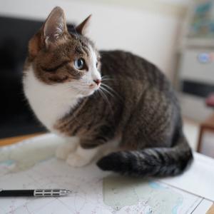 (猫1202)猫に箸落としそうになる飼い主とやっぱり勉強させない愛猫と