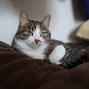 (猫1203)げろの上にハンカチかぶせる愛猫と勝手にアテレコする飼い主と