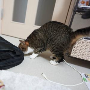 (猫1207)地域の割引クーポン買えた飼い主と鞄をあさる?愛猫と