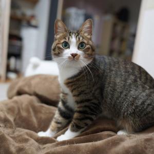(猫1209)うそんこの不在配達メールもらう飼い主とふみふみが止まらない愛猫と