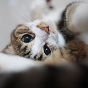 (猫1212)岩手の主任を思い出す飼い主と手を伸ばしてる愛猫と