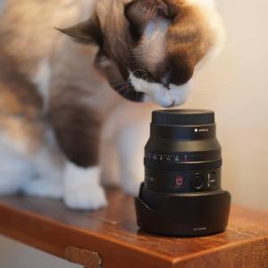 (猫1214)元気出そうと思って猫カフェで撮った写真を眺めてみた
