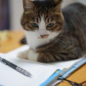 (猫1228)地域クーポン券使いこなせない飼い主と手帳踏んづける愛猫と