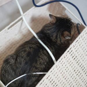 (猫1231)二度目のリモート飲み会とその最中荒ぶる愛猫と