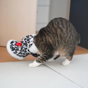 (猫1234)雪なげ場がねぇ(||゚Д゚)って騒ぐ飼い主とサンタブーツとドッキングの愛猫と