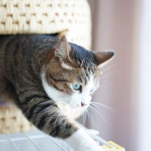 (猫1235)洗剤なしで洗濯機回す飼い主とケージ上を器用に歩く愛猫と