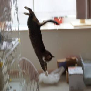 (猫1274)グラス再販だって!?の飼い主と飛び込み選手な愛猫と