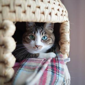 (猫1276)スコーン作ったよの飼い主と居心地の良い空間づくりをする愛猫と