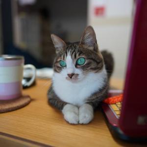(猫1278)メルカリ挑戦の飼い主とテレビ見てる愛猫と