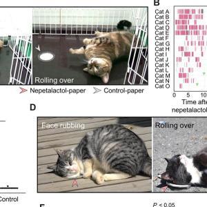 (猫1281)猫がマタタビをこすりつける理由が分かっただってーΣ (´Д`ノ)ノ