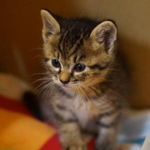 (猫1424)子猫と野良ぬこと武力介入について