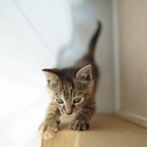 (子猫その29)そのうち鍵開けしそうな子猫について(猫1456)