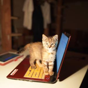 (子猫その30)猫ってなんでパソコン踏むのすきなん(猫1457)