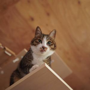 (子猫その33)運送会社を名乗る偽メールとタワーが安全位置の愛猫と(猫1460)