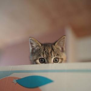 (子猫その35)断水に備える飼い主と新たな高さを開拓する子猫と(猫1462)