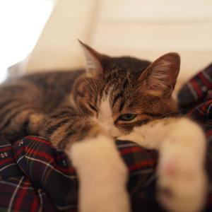 (子猫その37)換気扇作戦で過ごす我が家と半纏で昼寝の愛猫と(猫1464)