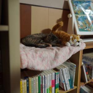 (子猫その61)いい加減子猫に名前を付ける会(猫1488)