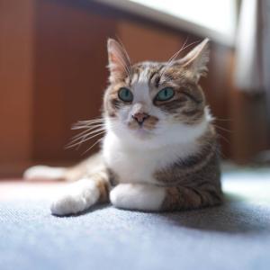 (猫1489)水族館などに行きたい飼い主と写真撮影に応じてくれる愛猫