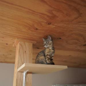(子猫その63)任天堂スイッチの値段におののく飼い主と(猫1491)