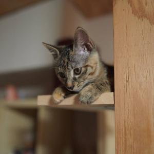(子猫その64)ボーナス使おうの飼い主とタワー最上段の愛猫たちと(猫1492)