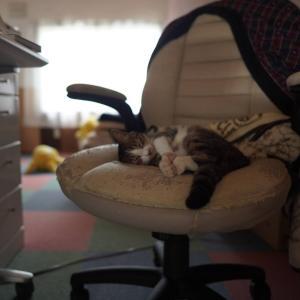 (猫1500)きりがいいけど特に何もないかい(●`ω´●)(子猫その72)