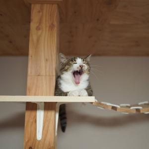 (子猫その73)うんこ踏んづけて爆走する子猫と体重計買った話(猫1503)