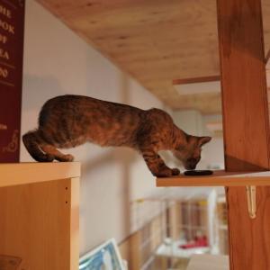 (子猫その74)本棚上の子猫と床の上の愛猫と(猫1504)