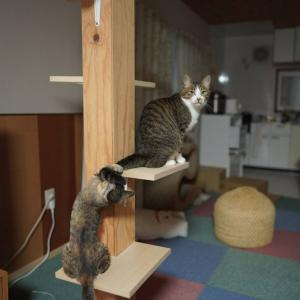 (子猫その81)脳ドックに興味がある飼い主としっぽじゃらしする愛猫と(猫1511)