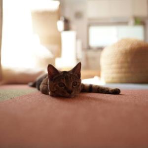 マグカップ収納棚を考える飼い主とたまには頑張らない子猫と(子猫その85)(猫1516)