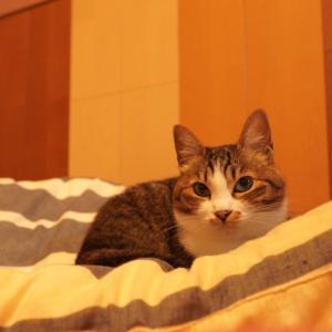 眼科で何もせず帰ってくる飼い主と隙間に入り込む子猫と(子猫その87)(猫1518)