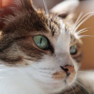 早起きコーヒー作戦を決行した飼い主と虫を狩るのが素早い愛猫と(子猫その106)(猫1538)