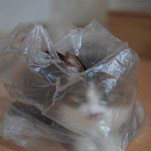 (猫836)猫とついてるとほいほいされちゃう飼い主とビニールに包まれている愛猫と
